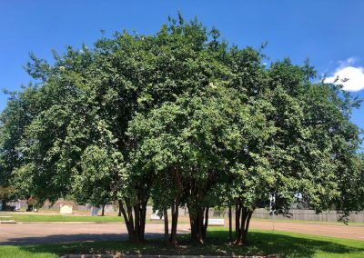 Beautiful shade trees in our parking areas